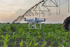 在灌溉系统前面的寄生虫飞行在麦地 免版税库存照片