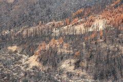 在火以后的森林 免版税库存照片