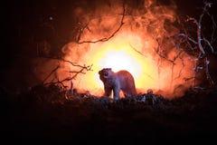 在火多云天空后的恼怒的熊 一头熊的剪影在有雾的森林黑暗背景中 选择聚焦 免版税库存图片
