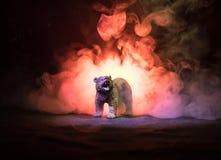 在火多云天空后的恼怒的熊 一头熊的剪影在有雾的森林黑暗背景中 选择聚焦 免版税图库摄影