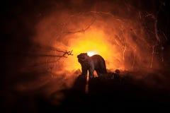 在火多云天空后的恼怒的熊 一头熊的剪影在有雾的森林黑暗背景中 选择聚焦 图库摄影
