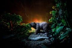 在火多云天空后的恼怒的熊 一头熊的剪影在有雾的森林黑暗背景中 免版税库存照片