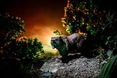在火多云天空后的恼怒的熊 一头熊的剪影在有雾的森林黑暗背景中 免版税图库摄影