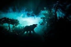 在火多云天空后的恼怒的熊 一头熊的剪影在有雾的森林黑暗背景中 库存图片