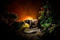在火多云天空后的恼怒的熊 一头熊的剪影在有雾的森林黑暗背景中 库存照片