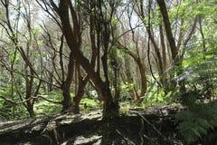 在火山国家公园,大岛,夏威夷的Kilauea Iki豪华的密林足迹 免版税库存图片