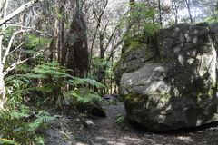 在火山国家公园,大岛,夏威夷的Kilauea Iki豪华的密林足迹 免版税库存照片