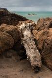 在火山岩的漂流木头 免版税库存图片