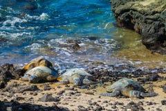 在火山的海滩的乌龟 免版税库存图片