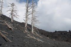 在火山的被烧的树 免版税库存照片