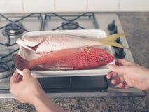 在火炉的两条异乎寻常的鱼 免版税库存图片