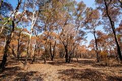 在火烧伤森林变得干旱后 免版税库存图片
