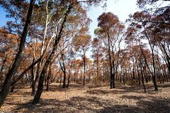 在火烧伤森林变得干旱后 免版税图库摄影