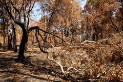 在火烧伤森林变得干旱后 库存照片