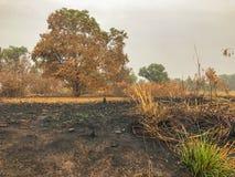 在火烧伤森林变得干旱后 图库摄影