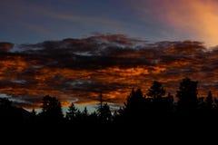 在火热的云彩的树 免版税库存照片