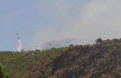 在火的交火直升机滴下的水在森林 免版税库存照片