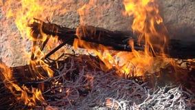 在火的传统calsots在超级慢动作 股票视频