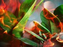 在火的叶子 免版税库存图片
