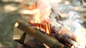 在火的日志烧伤,特写镜头 灼烧的干燥日志 股票视频