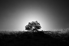在火的树在日落 免版税库存照片