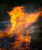 在火的牡鹿 免版税库存照片