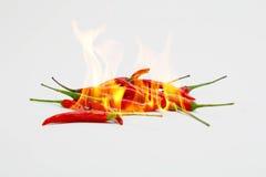 在火的辣椒 库存照片