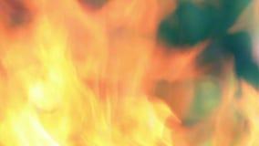 在火盆的火。 股票录像