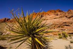 在火谷的植被  库存照片