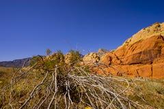 在火谷的植被  免版税库存图片