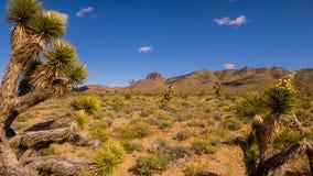在火谷的植被  库存图片