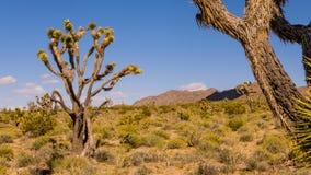 在火谷的植被  免版税图库摄影