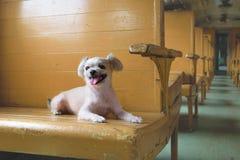 在火车的狗 免版税库存照片