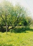 在火车轨道附近的树枝 库存照片