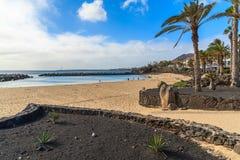 在火鸟海滩的棕榈树 免版税库存图片