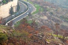 在火以后的树 库存图片