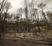 在火以后的森林 免版税库存图片