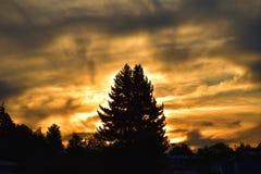在火-日落的树 免版税库存照片