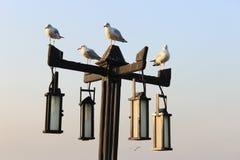 在灯的海鸥 免版税库存图片