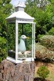 在灯笼的海鸥 库存图片