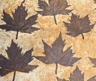 在灰浆的叶子 库存照片