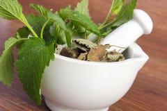 在灰浆,草药医术学,替代医学的新鲜的绿色和干香蜂草 免版税库存照片