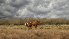 在灰色云彩下的三匹马 免版税图库摄影