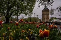 在灰色云彩下的花在曼海姆水塔 免版税库存图片