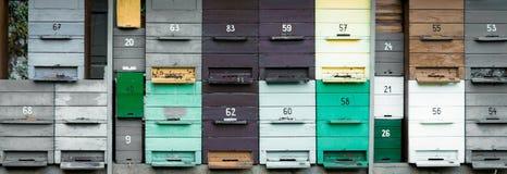 在灰色和绿色的蜂房 库存图片