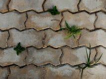 在灰色地板上的植物 图库摄影