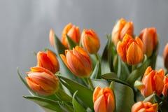 在灰色墙壁上的美丽的橙色和黄色郁金香 背景花光playnig 颜色温暖 复制空间 免版税库存照片
