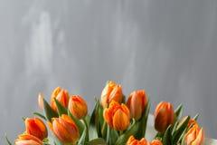 在灰色墙壁上的美丽的橙色和黄色郁金香 背景花光playnig 颜色温暖 复制空间 免版税图库摄影