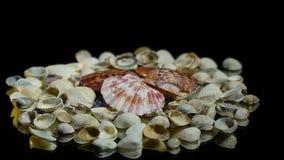 在灰色壳的桃红色贝壳,在镜子桌上慢慢地转动 影视素材