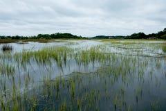 在灰色多云天期间,南卡罗来纳低地国家沼泽充斥了 免版税图库摄影